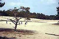 Zandvlakte bij Ommen met de naam Sahara