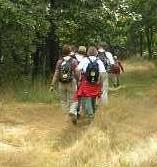 tweede dag Kempische wandeldagen - bosgebied Gebergten en Herselse Heide