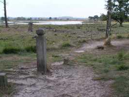 tweede dag Kempische wandeldagen - uitzicht vanaf de Hoenderboompaal op de Grafvennen