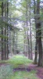 derde dag Kempische wandeldagen - één van de fraaie wandelpaden waarover de route voerde