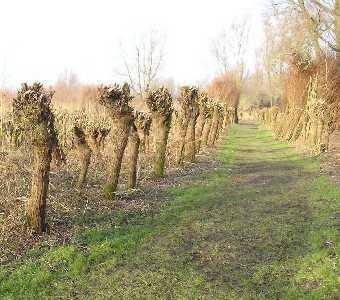 Tijdens de WS78 Biesboschtocht  vanuit Dordrecht op 7 januari 2006. bosgebied omzoomd door  het Gat van den Hardenhoek en  het Gat van den Kleinen Hil