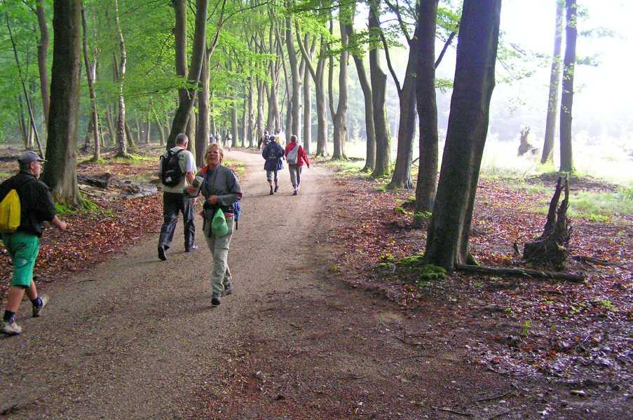Apeldoornse vierdaagse 2008  in bosgebied Berg en Bos