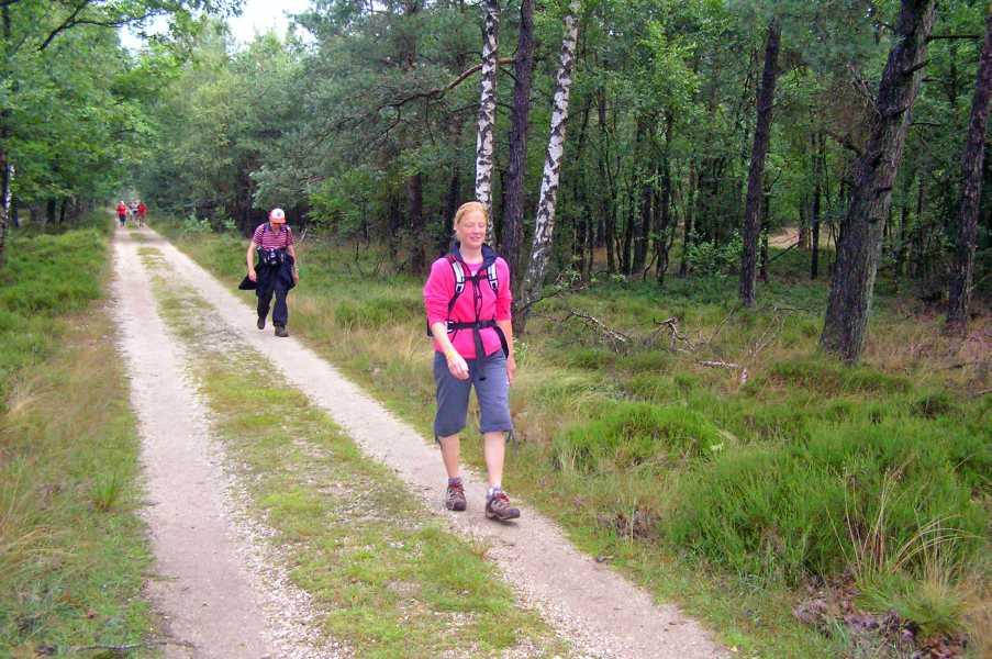 Apeldoornse vierdaagse 2008  in boswachterij Ugchelen-Hoenderloo