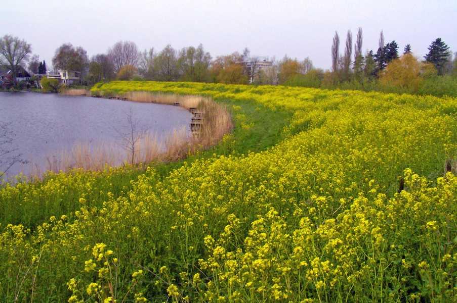 oude NS wandeling Linge,   langs het Galgenwiel