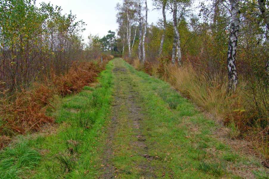 Peellandpad  De Groote Peel