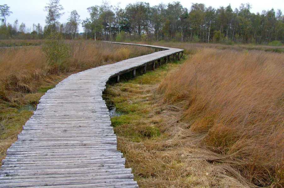Peellandpad  knuppelbruggetje in de Groote Peel
