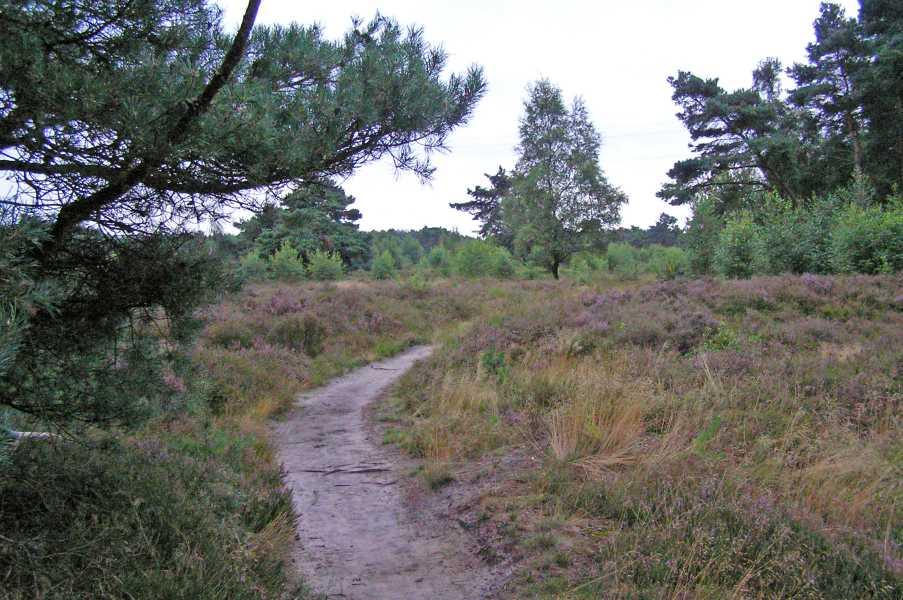 Kempische wandeldagen 2008, 3e dag  Groote Heide