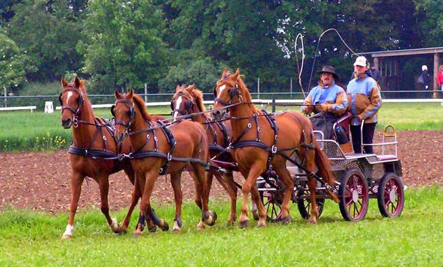 Met de Ronde van Zuid-Limburg 2008  paarden nabij Hilleshagen