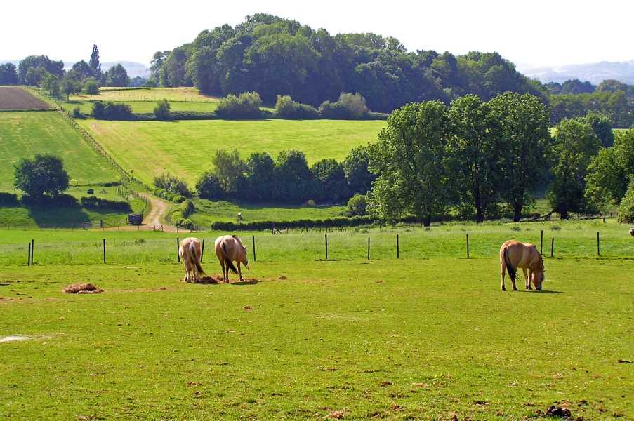 Met de Ronde van Zuid-Limburg 2008  nabij Walem