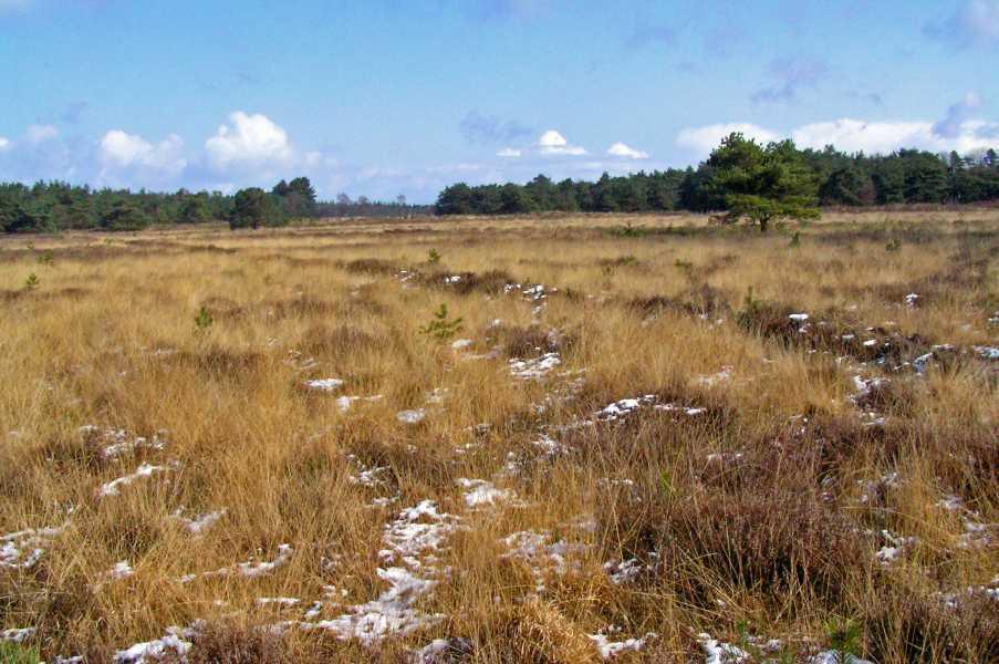 landgoed Breeveen