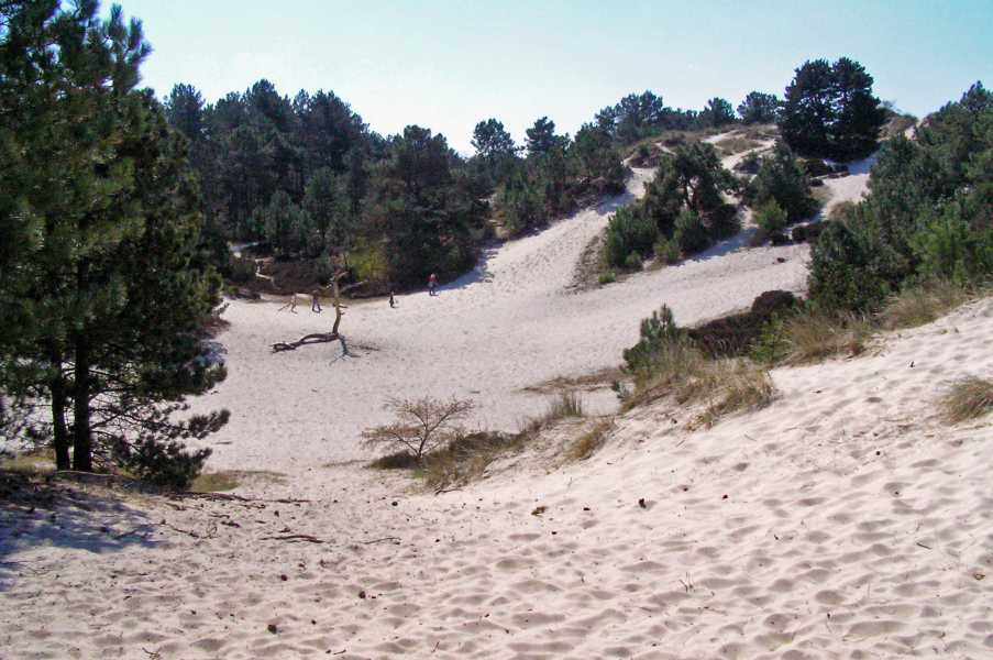 bos-, duin- en strandtocht van de LAT op 18 april 2009  zandvlakte in boswachterij Schoorl