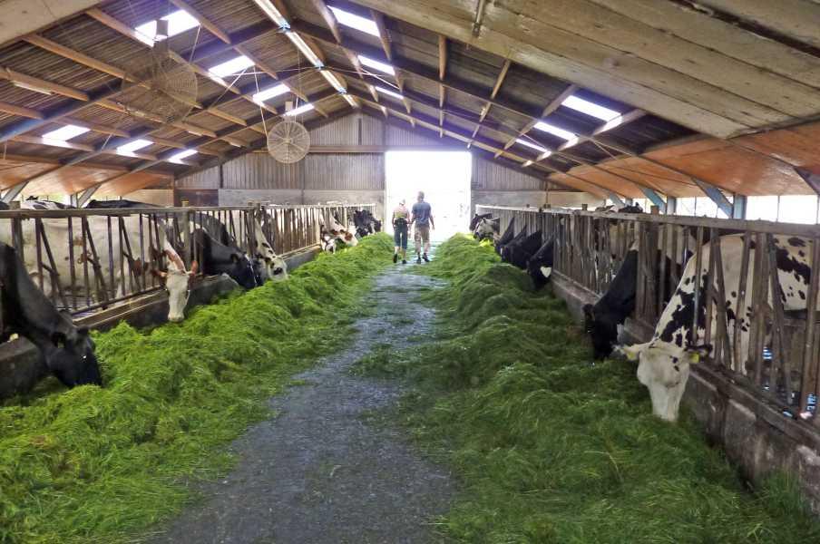 Swaddekuier tweedaagse  door deze koeienstal voerde de route