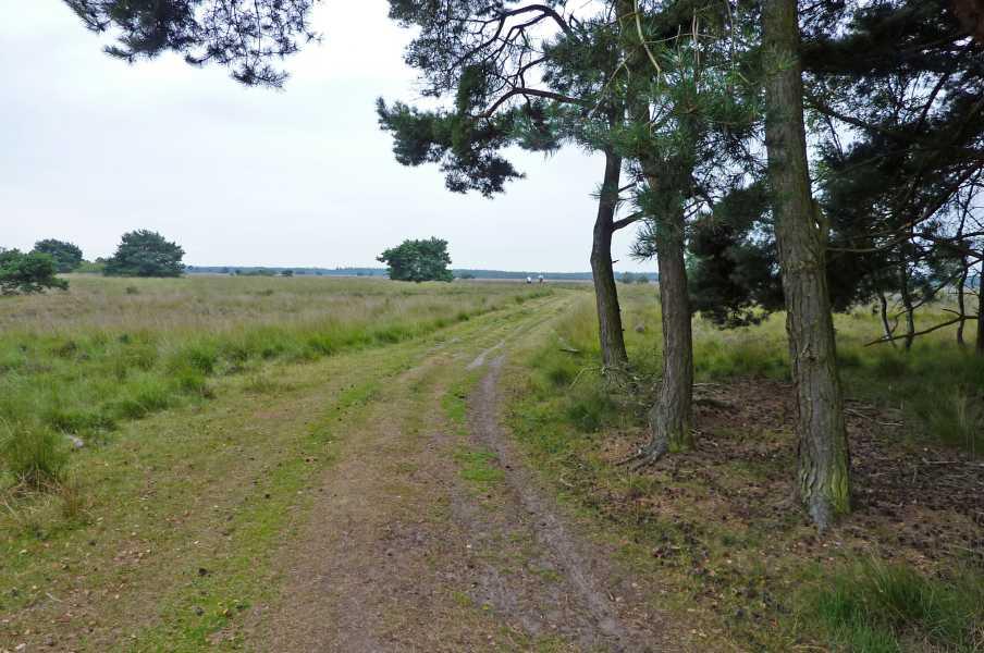 Kempische wandeldagen 2009,   op de Strabrechtse Heide