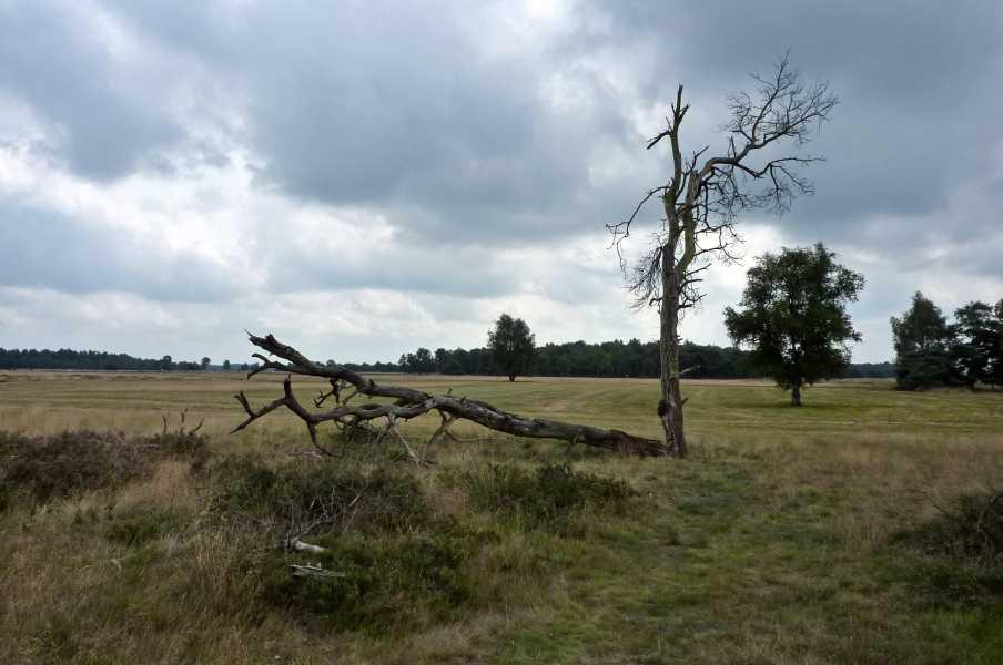 Kempische wandeldagen 2009,   Strabrechtse Heide