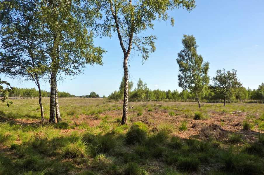 Kempische wandeldagen 2010,   Strabrechtse Heide