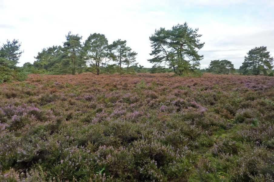 NS wandeling Hunzedal  in bosgebied Buinerveld