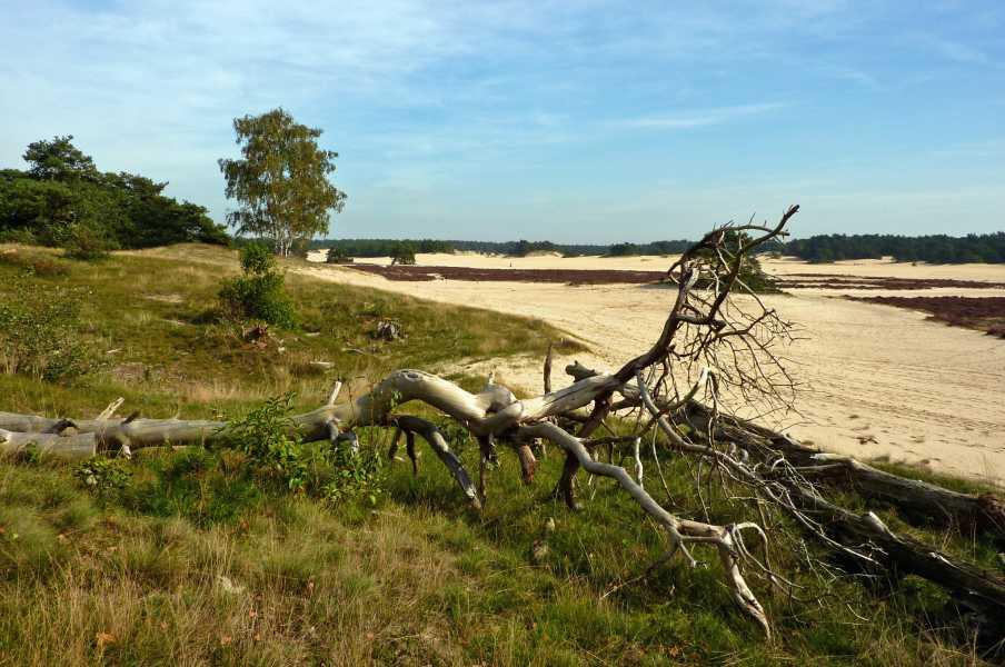 NS wandeling Leuvenumse beek  Hulshorster Zand