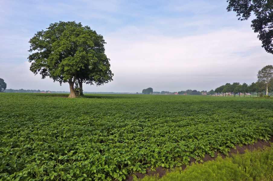 17e Drents Friese Wold Wandelvierdaagse 2011  Langs de Soerte in Wapse