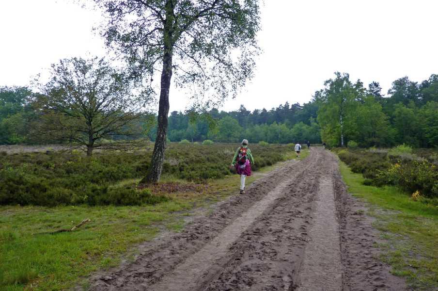 17e Drents Friese Wold Wandelvierdaagse 2011  heideveld nabij camping De Reeënwissel