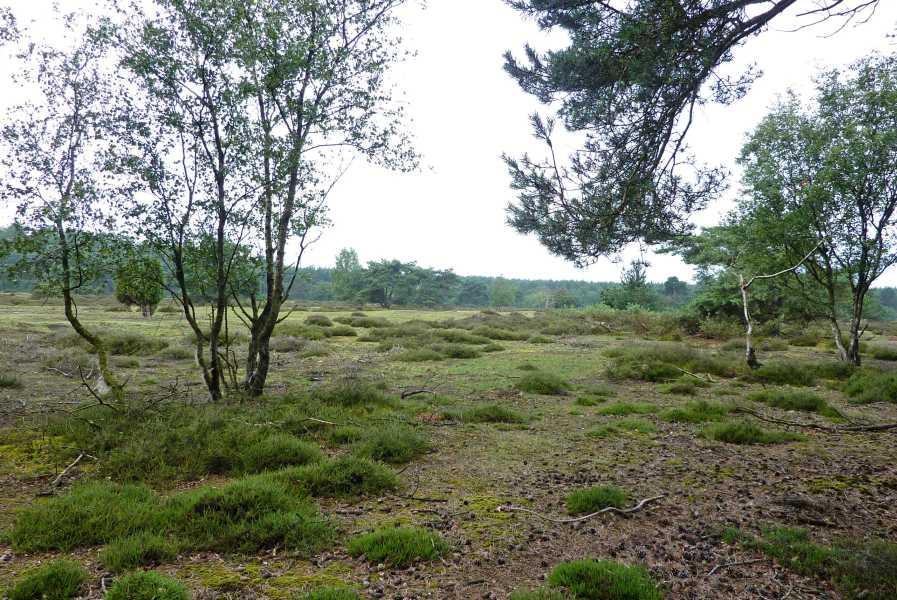 3e Toeractief Vechtdal vierdaagse 2011  nabij Hoogengraven