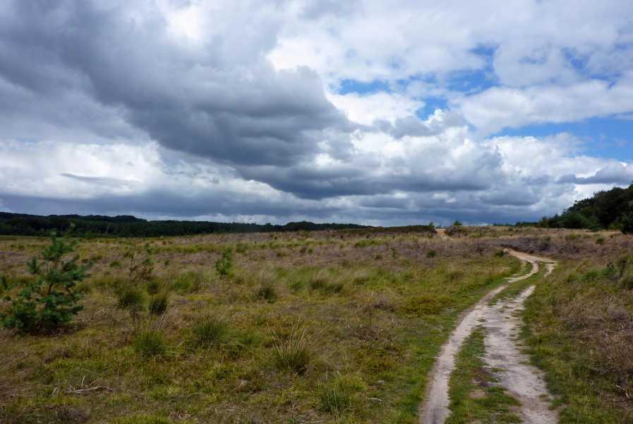de marathon van Apeldoorn  Hoog Buurlose Heide