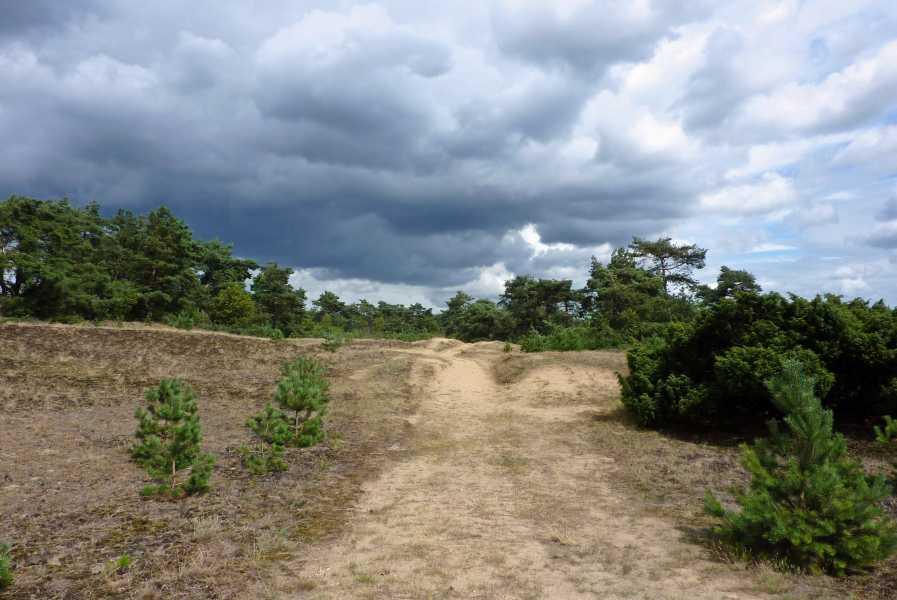 de marathon van Apeldoorn  Kootwijkerzand