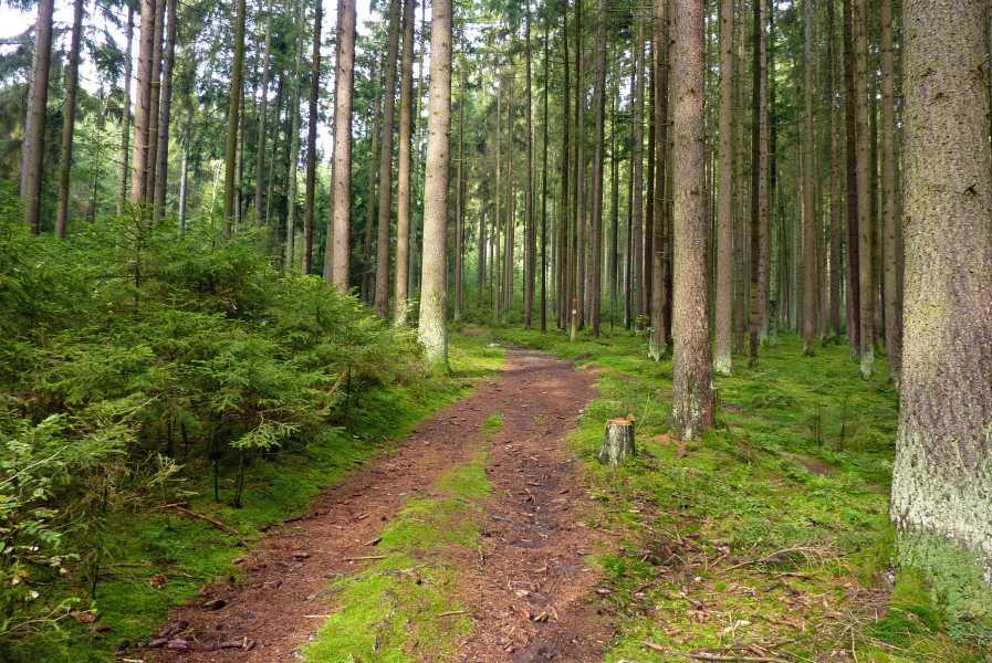 Pandurensteig  nabij Altrandsberg