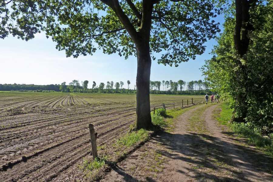 18e Drents Friese Wold Wandelvierdaagse 2012  nabij Wittelte
