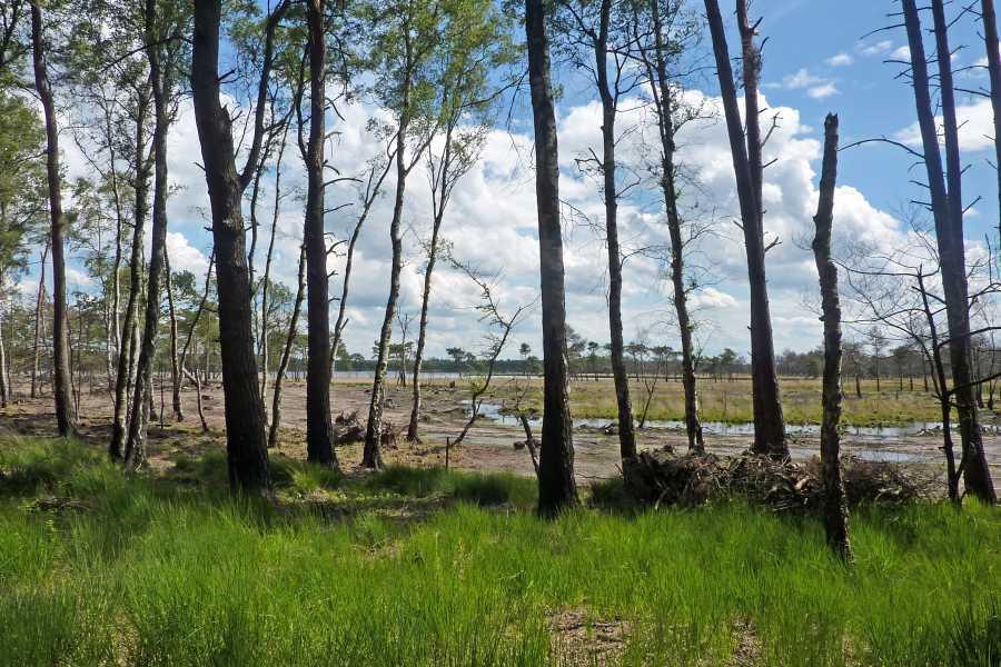NS wandeling Wouwse Plantage (GR5)  Kalmthoutse Heide