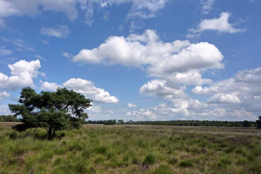 Kempische wandeldagen 2012  Strabrechtse Heide