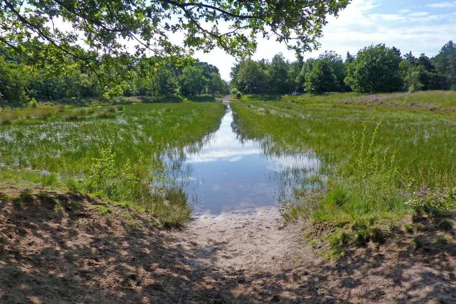 Kempische wandeldagen 2012  Wasven in bosgebied  Geeneindsche Heide