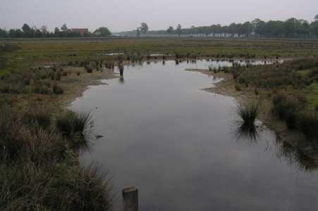 Met de Drentsch-Friese Wold Wandelvierdaagse (Diever) 2006 natuurgebied in buurtschap Oude Willem