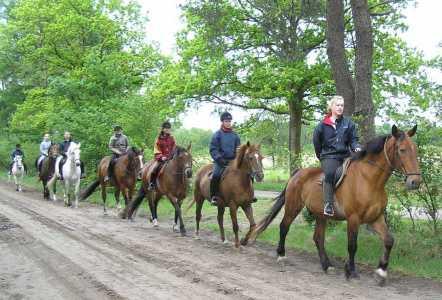 Met de Drentsch-Friese Wold Wandelvierdaagse (Diever) 2006 amazones in het Uffelterveen
