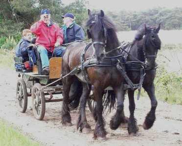 Met de Drentsch-Friese Wold Wandelvierdaagse (Diever) 2006 op weg naar het Wittelterveld