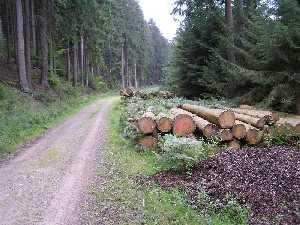 tijdens de Europäischer Fernwanderweg E8, in het Mulartshütte Wald