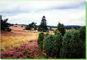 Heide bij Niedersfeld