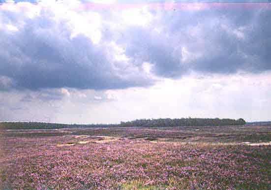 Ginkelse Heide in de gemeente Ede