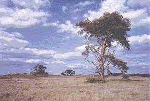 landschap De Hoge Veluwe