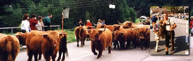 Donnersbach Almabtrieb