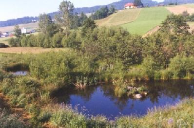 Peilstein Hofwiese biotop