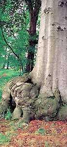 boomwortel in de bossen bij Doetinchem