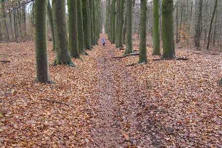 Tijdens de WS78 Klim naar de Posbank tocht vanuit Arnhem op 21 januari 2006