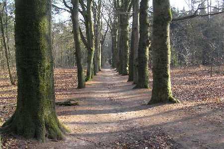 Tijdens de WS78 Valouwetocht vanuit Lunteren op 25 februari 2006; in het Edese bos