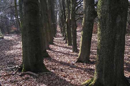 Tijdens de WS78 Valouwetocht vanuit Lunteren op 25 februari 2006; in het Roekelse bos