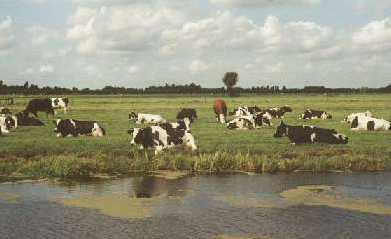 omgeving Reeuwijk